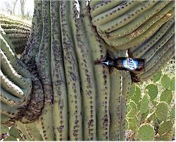 A hot day in Tucson, AZ